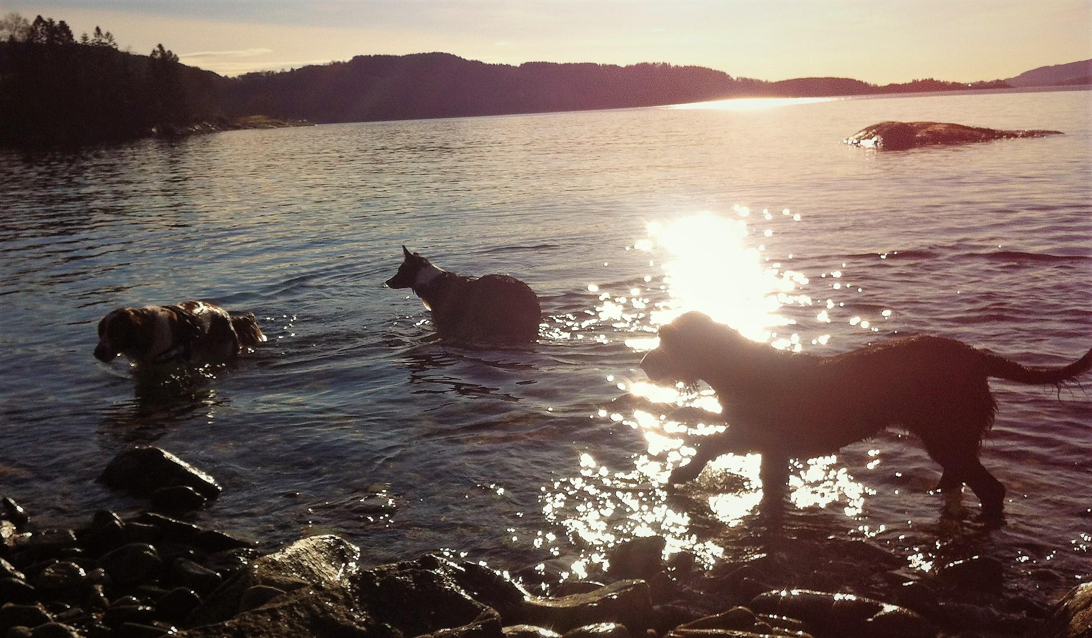 Møte mellom hunder